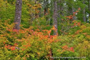 Colors start to pop in the Nestucca Forest by SkyVista Photography/Steve Luther