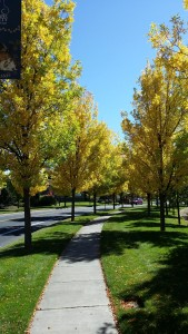 Bond Street (Bend, OR) Lined with Gold from Visit Bend