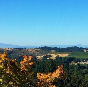 The Fall view from the Willamette Valley Vineyards by Willamette Valley Visitor's Association